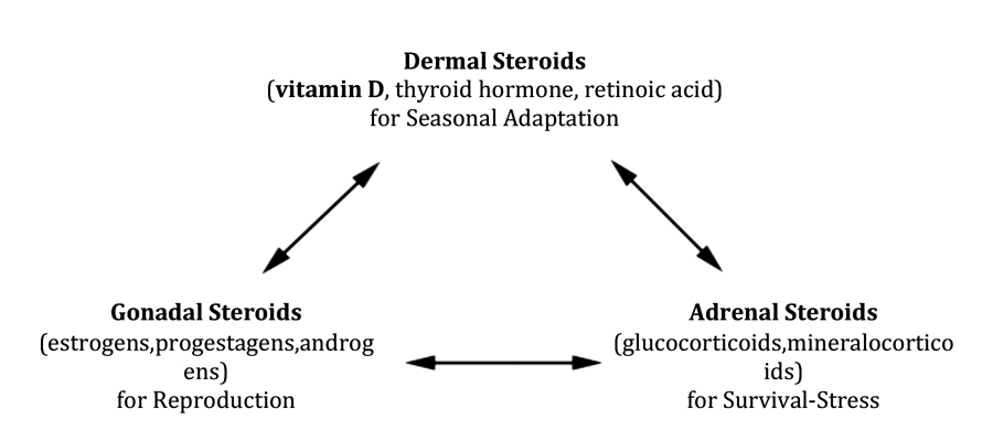 Vitamin D (soltriol) the steroid hormone for seasonal adaptation of growth, procreation and maintenance-survival. Interactions with gonadal and adrenal steroid hormones