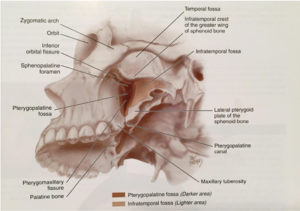 Source: McCullers, Head and Neck Anatomy, Chapter 3