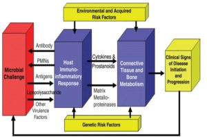 Periodontal Disease Model  (Kornman, K. J Periodontol • August 2008)14