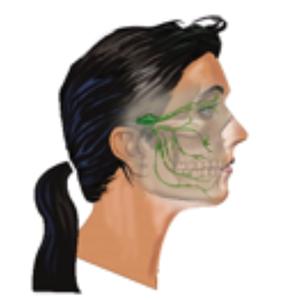 Trigeminal/Vagus Nerve