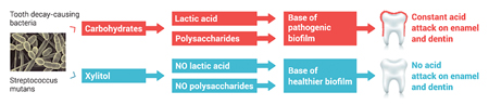 Mechanism of Action of Xylitol Against Streptococcus mutans.