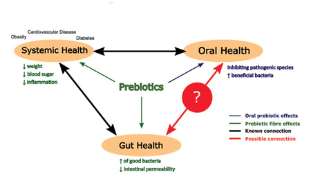 gut dysbiosis xylitol cancer colorectal has