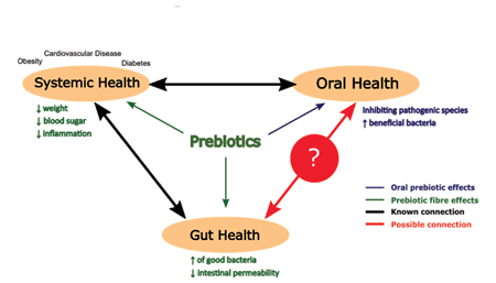The relationship between our oral, gut and systemic health.