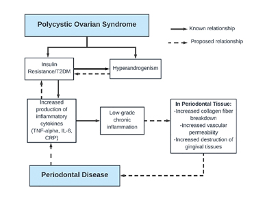 Proposed Factors Linking Polycystic Ovarian Syndrome and Periodontal Disease: Evidence suggests polycystic ovarian syndrome (PCOS), which can contribute to insulin resistance; type II diabetes; and hyperandrogenism, can also cause low-grade chronic inflammation through increased production of inflammatory cytokines. This could have direct effects on periodontal tissue and lead to periodontal disease. (Young HE & Ward WE, 2020, unpublished).