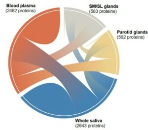 A diagram that shows the interconnectedness of the thousands of salivary proteins originating from blood plasma, parotid glands, and submandibular and sublingual glands. The diagram is one of many tools available to researchers and clinicians through the Human Salivary Proteome Wiki.